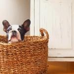 ペットの匂い対策はどうしてる?臭い消しによいものとは?