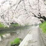 桜の名所!100選 どのようにして決まる?